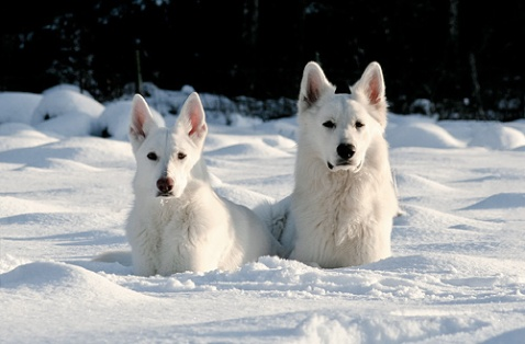 Mina fina hundar